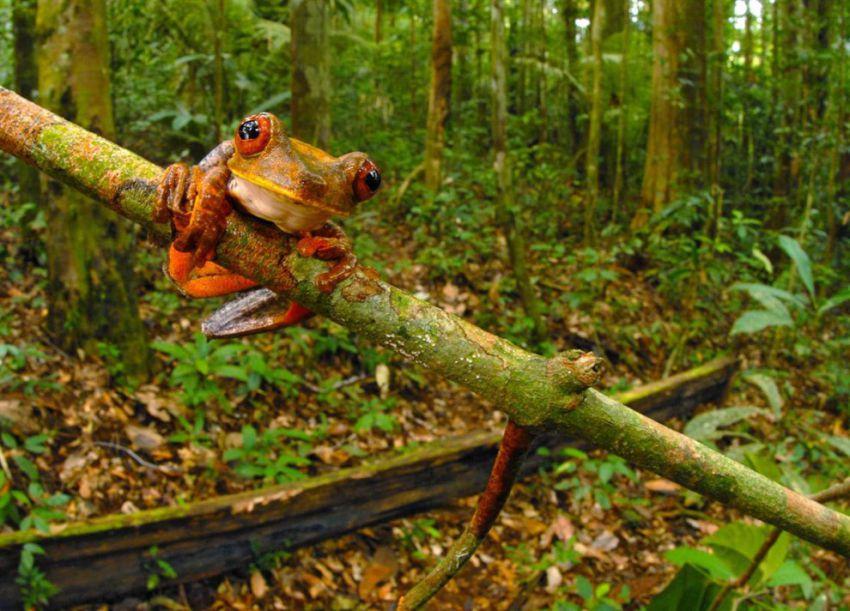 Суринам фото