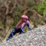 Могут ли рептилии взбираться на деревья?