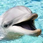 Дельфины. Тайны сознания.
