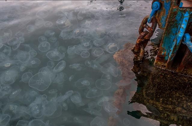 медузы в Балаклаве