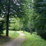 Лесная прогулка: пешие походы.