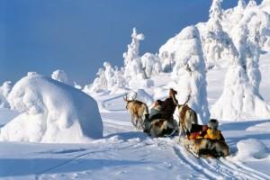 Катание на оленях в Финляндии